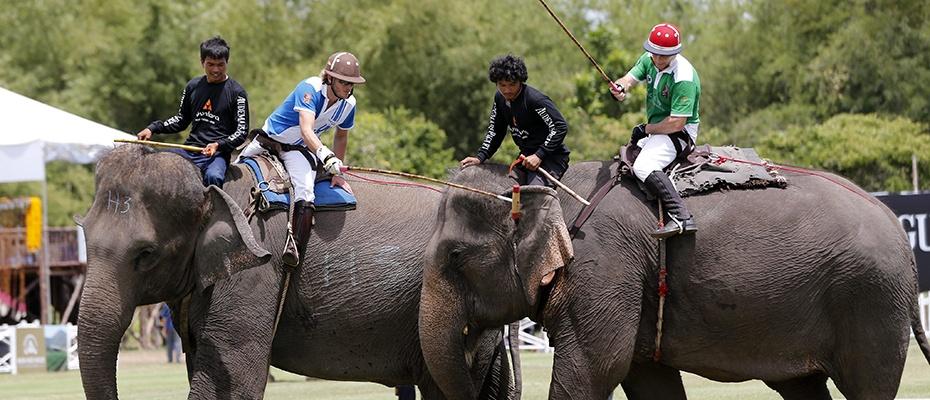 泰國芭堤雅大象村騎象門票,泰國芭堤雅大象村騎大象,泰國芭堤雅大象村門票,芭堤雅大象村騎大象,芭堤雅大象村探險,泰國芭堤雅騎大象探險