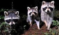 清邁夜間野生動物園復活節遊玩tips