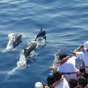 台灣宜蘭登龜山島賞鯨豚體驗