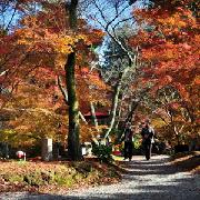 日本紅葉景點