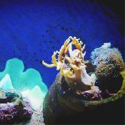蘭卡威海底世界水族館門票