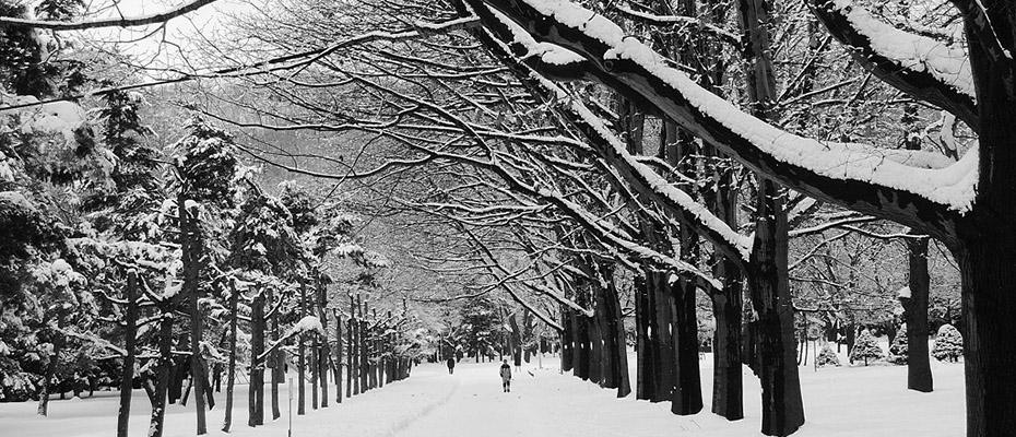 札幌場外交易市場和白色戀人公園半日遊