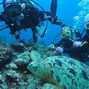 仙本那馬布+卡帕萊出海深潛一日遊