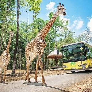 【12-22秒殺】越南富國島SAFARI野生動物園門票