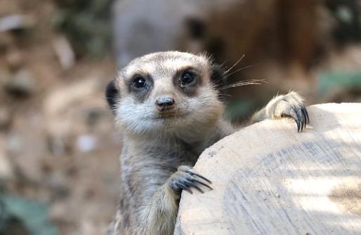 香港海洋公園非洲動物區全新開放