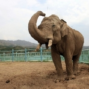 大青山野生動物園