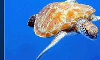 我每一年八月都在沖繩玩水,浮潛或深潛、本年2014八月行程 PLAN..